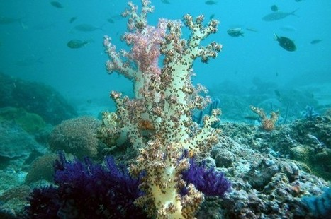 Coral reefs go silent as they die impacted by human activity - International Business Times UK | My Funny Africa.. Bushwhacker anecdotes | Scoop.it