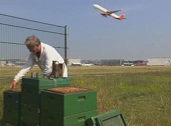 Les abeilles, contrôleuses aériennes de la pollution | EntomoNews | Scoop.it