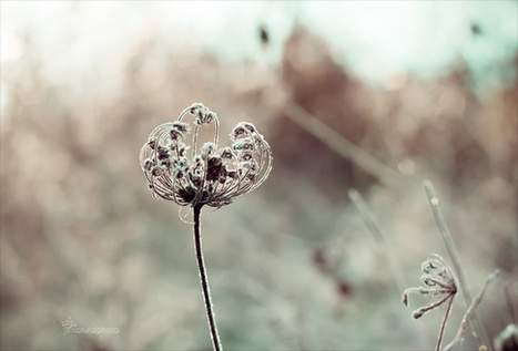 How To Photograph Flowers | Photography | Scoop.it