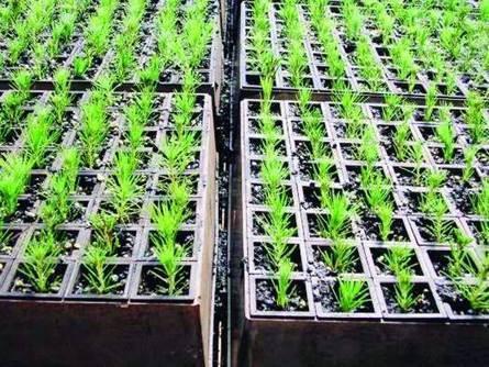 Se desembolsarán varios créditos para la inversión en reforestación ... | El Negocio De La Reforestacion. | Scoop.it