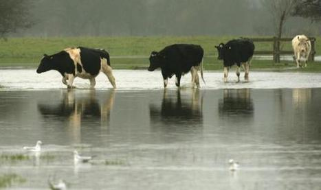 Colchester flooding alert as River Stour is swamped by rain | Essex Discount Card News & Offers | Scoop.it