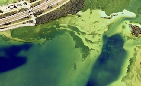 Geomatics Data Solutions Fills Bathymetric LIDAR Gap with CHIROPTERA II - GISuser.com (press release) | Geomatics | Scoop.it