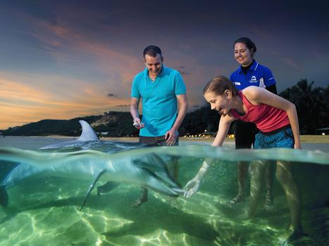 Dolphin Experience & Gold Coast tour Australia | International holiday Destinations | Scoop.it