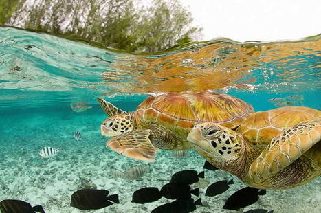 Ocean turtle photography | amberosgoodbyce | Scoop.it