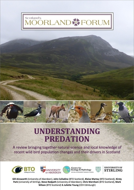 Moorland Forum - Understanding Predation Report Launch | GarryRogers Biosphere News | Scoop.it