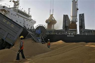 India reaps reward of bumper wheat crops as world exports shrink | Freight Forwarding from JNPT | Scoop.it