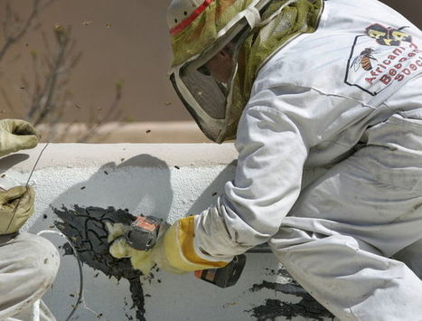 Be wary of bees entering home's rafters | CALS in the News | Scoop.it