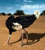 El efecto avestruz | Herejia | Scoop.it
