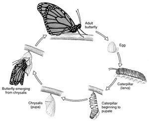 14 - Un TP, un article: La Croisière ça Mue | EntomoScience | Scoop.it