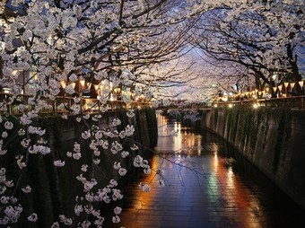Cherry Blossom Picture -- Tokyo Photo -- National Geographic Photo of the Day | Mon Oeil | Scoop.it