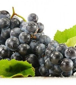 Grape Seed Extract Shows Potent Anti-cancer Activity | Nutrition Today | Scoop.it