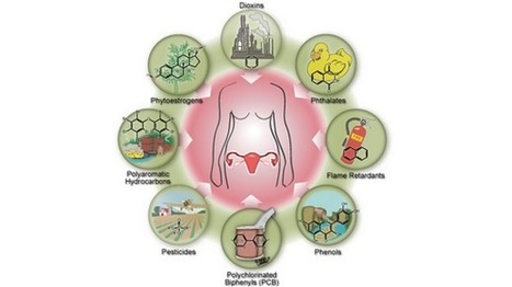 Study links early menopause to everyday exposure – but NOT cosmetics! | Organic and Natural Beauty Product news | Scoop.it