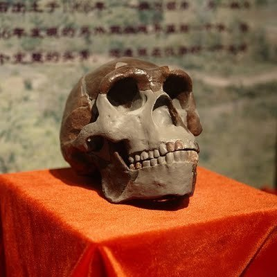 Unreported Heritage News: Did Peking Man wield a spear? New research suggests early humans were assembling weapons in China 700,000 years ago   Anthropology and Archaeology   Scoop.it