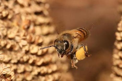 Does This Study Prove Monsanto Company is Killing Our Honey Bees? (BAYRY, MON, SYT) | Chemistry Regulation | Scoop.it