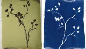 The Big Cyanotype Exposure Survey – Results | L'actualité de l'argentique | Scoop.it