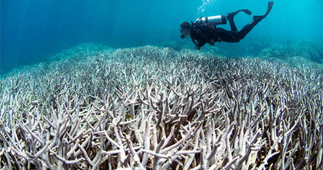 NOAA: World's Worst Coral Bleaching Event to Continue 'With No Signs of Stopping' | Water Stewardship | Scoop.it