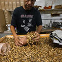 From icky bugs to good grub: Why more people are eating insects | Entomophagy: Edible Insects and the Future of Food | Scoop.it