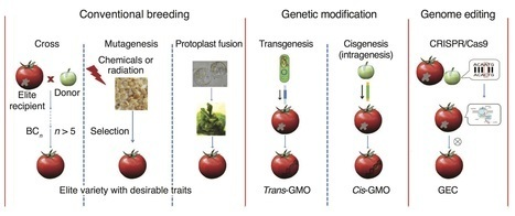 A proposed regulatory framework for genome-edited crops | Emerging Research in Plant Cell Biology | Scoop.it