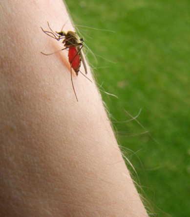 Buzz Off! Rutgers Doc Offers Tips on Bug Bites and Stings - Patch.com   Animal & Insect Allergy   Scoop.it