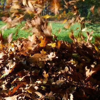 12 Rules of Raking Leaves in the Fall: Organic Gardening | 100 Acre Wood | Scoop.it