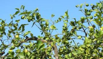 La forêt de Briqueloup : Faire briller les feuilles | GenealoNet | Scoop.it