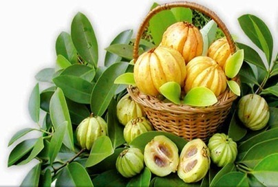 Additional added benefits available within the garcinia cambogia | garcinia cambogia | Scoop.it