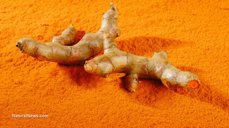 Turmeric naturally increases brain cell growth | Longevity science | Scoop.it