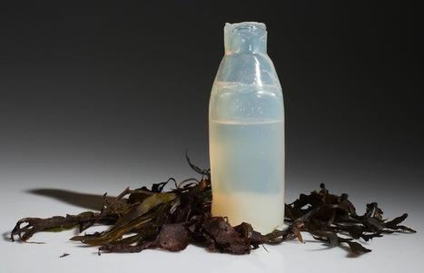 Islande : un étudiant crée une bouteille d'eau biodégradable | Ca m'interpelle... | Scoop.it