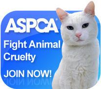 Animal Advocacy Project: Cat Vocalizations   Pet News   Scoop.it