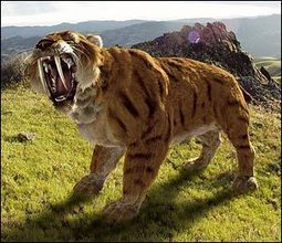 Fossil Evidence Shows That Sabertooth Cats Did Not Die Out Due to Starvation - Cleveland Leader | Geology | Scoop.it
