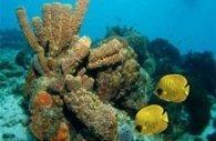 Le réchauffement climatique fait rétrécir les poissons | Protection des Océans | Scoop.it