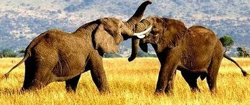 When elephants fight, who suffers? | Breakthrough leadership | Scoop.it
