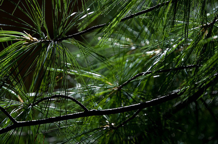 Why Every Business Blog Needs Evergreen Content | Contentmanagement | Scoop.it