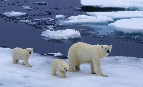 Polar Bears International | Polar Bears and Global Warming | Scoop.it