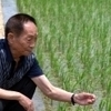 Hybrid-rice pioneer Yuan Longping backs genetically modified foods | Food issues | Scoop.it