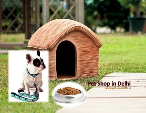 Pet Shop in Delhi | Petshopdelhi | Scoop.it