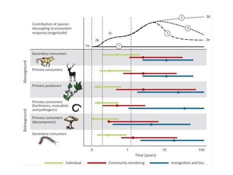 Hierarchical responses of plant–soil interactions to climate change: consequences for the global carbon cycle   EcoFINDERS -  Science for a sustainable use of soils   Scoop.it