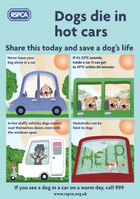 Dogs Die In Hot Cars Warning: Your Rights And Actions If You See A Dog In A Car | West Bridgford Wire | Dog Lovers | Scoop.it