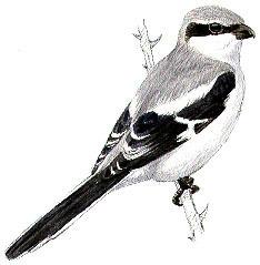 Las 10 especies de aves que más población pierd...   Las aves   Scoop.it