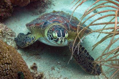 St Vincent et les Grenadines, paradis des plongeurs | Naviguer dans les caraïbes | Scoop.it