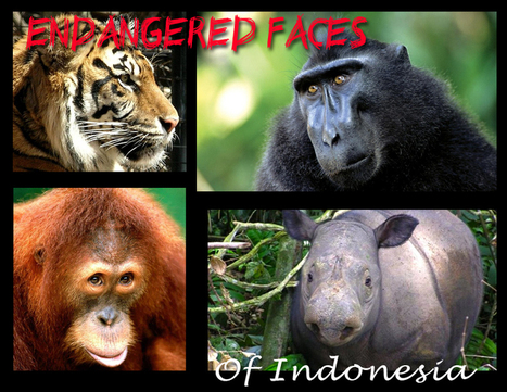 Prominent Indonesian Muslim clerics declare hunting, trading of endangered animals are immoral | GarryRogers NatCon News | Scoop.it