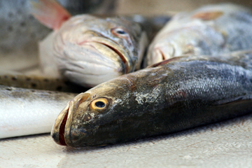 The Most Harmful Type of Fish to Eat - Ask Dr. Maxwell | Nutrition Dos and Don'ts | Scoop.it