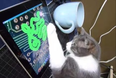 Cats Deserve a Better Video Game | Little Bit's Toys | Scoop.it