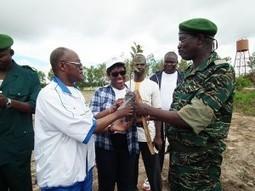 Mali : 55è anniversaire de l'indépendance du Burkina Faso : SOUS LE SIGNE DE LA LUTTE CONTRE LA DEFORESTATION   La parole de l'arbre   Scoop.it