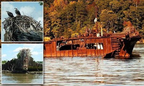 Pictures of abandoned site of 200 scuttled shipwrecks including a WWI armada - Daily Mail | DiverSync | Scoop.it