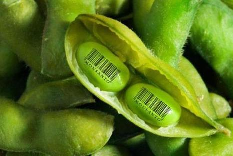 EcoPortal.net's Facebook Wall: Batalla por las semillas entre poderosos<br/>http://www.ecoportal.net/   Agroindustria Sostenible   Scoop.it