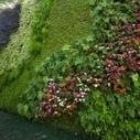 Casa de Valentina - Jardim vertical exuberante | tecnologia s sustentabilidade | Scoop.it