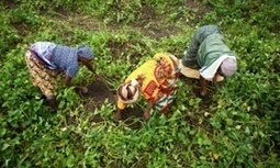 Farmers versus big business: the politics of irrigation in Tanzania | Questions de développement ... | Scoop.it