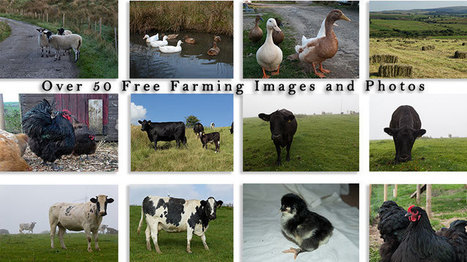 Download over 50 Farm Animals Photographs for Free | Farming and the Countryside | Scoop.it