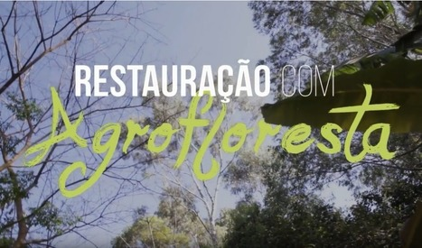 What agroforestry in Brazil looks like | Lorraine's Environmental Change &  Management | Scoop.it